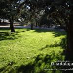 Pradera de césped del Parque de la Constitución