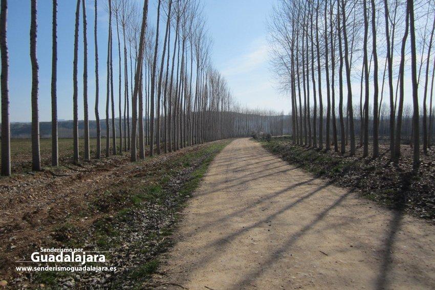 choperas_ruta_ermitas_yunquera_henares