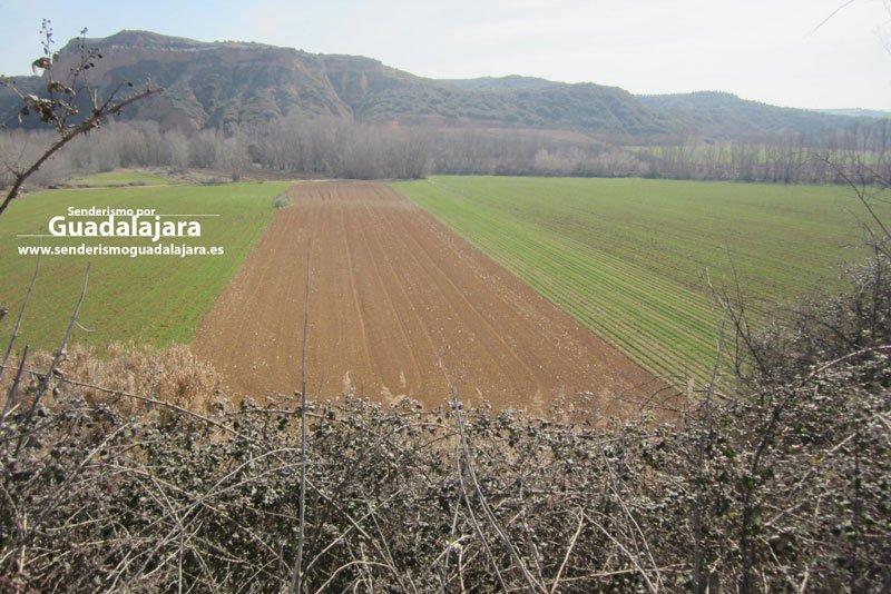 Campos de cultivo junto a la orilla del Río Henares