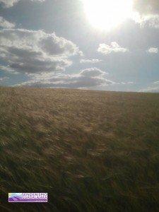 paisaje_cultivos_guadalajara