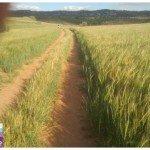 ruta_de_las_espigas_guadalajara_02