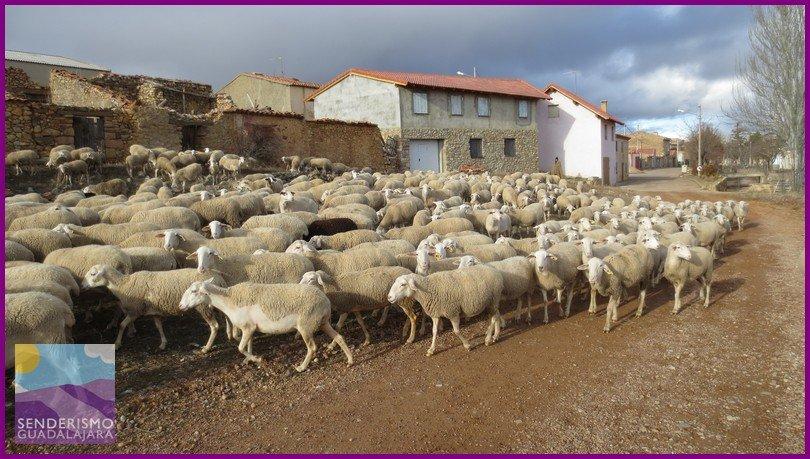 senderismo_guadalajara_castillo_de_zafra00245