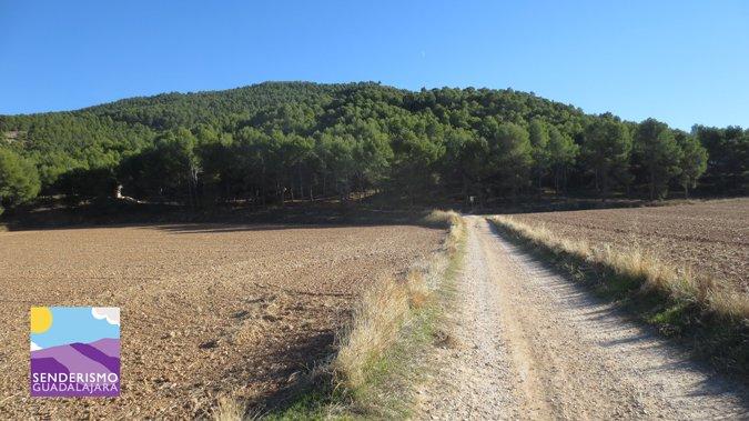 El camino se adentra rápido entre los pinares