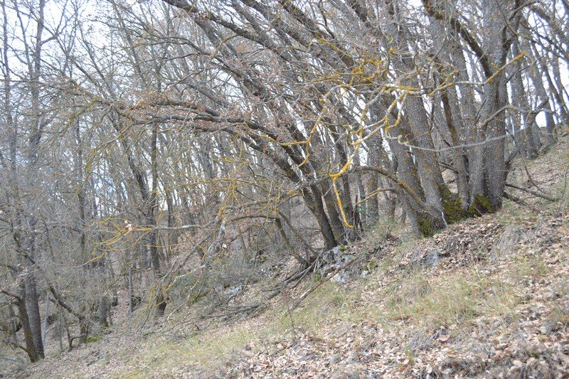Descubriendo el Bosque de Valdenazar, cerca de Valdeluz