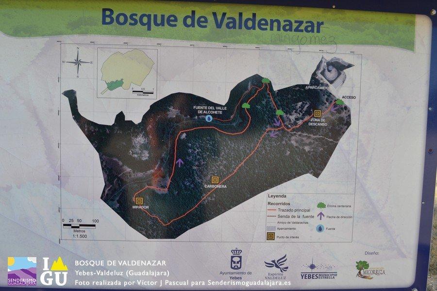 Bosque_de_valdenazar_02