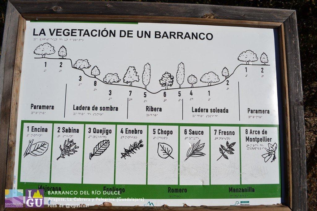 aragosa_barranco_rio_dulce_21