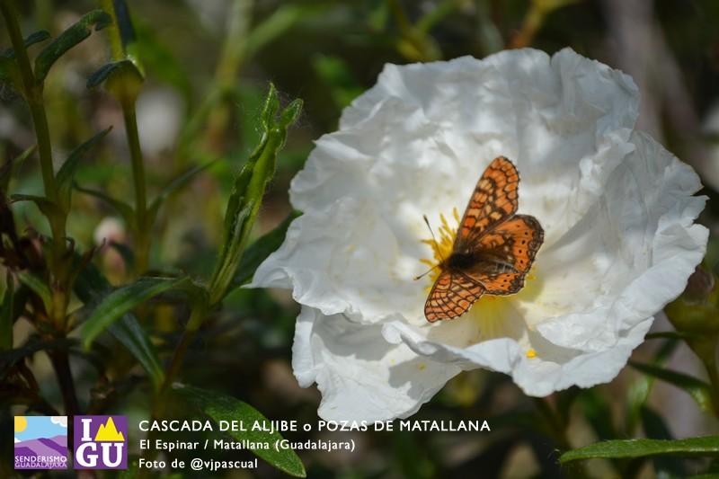 cascada_pozas_aljibe_92