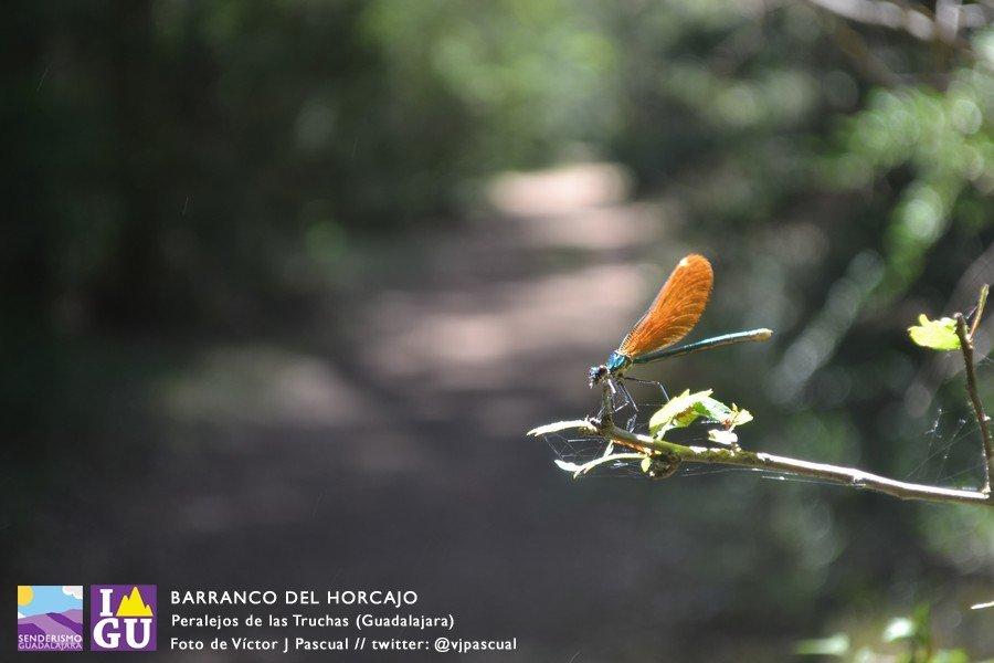 barranco_horcajo_alto_tajo_17