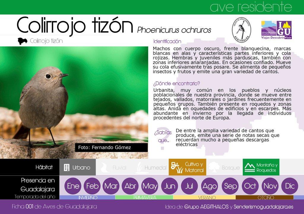 ficha_001_aves_guadalajara_colirrojo_tizon