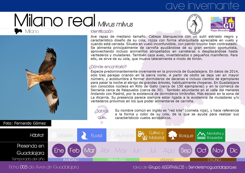 ficha_005_milano_real