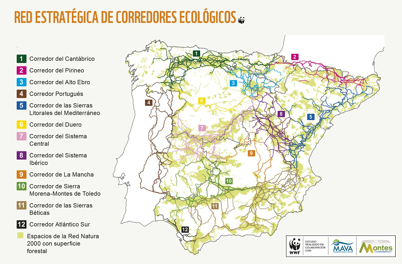 WWF presenta la red de Corredores Ecológicos o Autopistas Salvajes