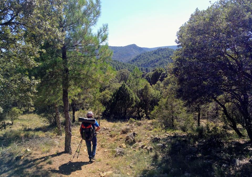 Trekking del Alto Tajo: etapa 4. Villar de Cobeta – Huertapelayo