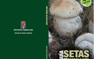 Dónde ir de setas en Guadalajara – Guía de Setas Guadalajara 2020